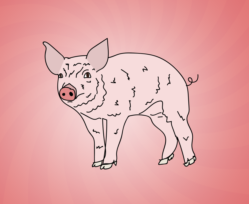 National Pig Day illustration