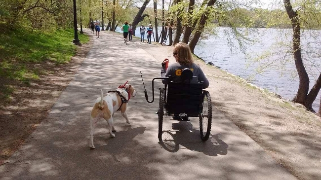 The Springer,  a dog walking arm intended for use on a bicycle, but slightly modified to be used on the  GRIT Freedom Chair.