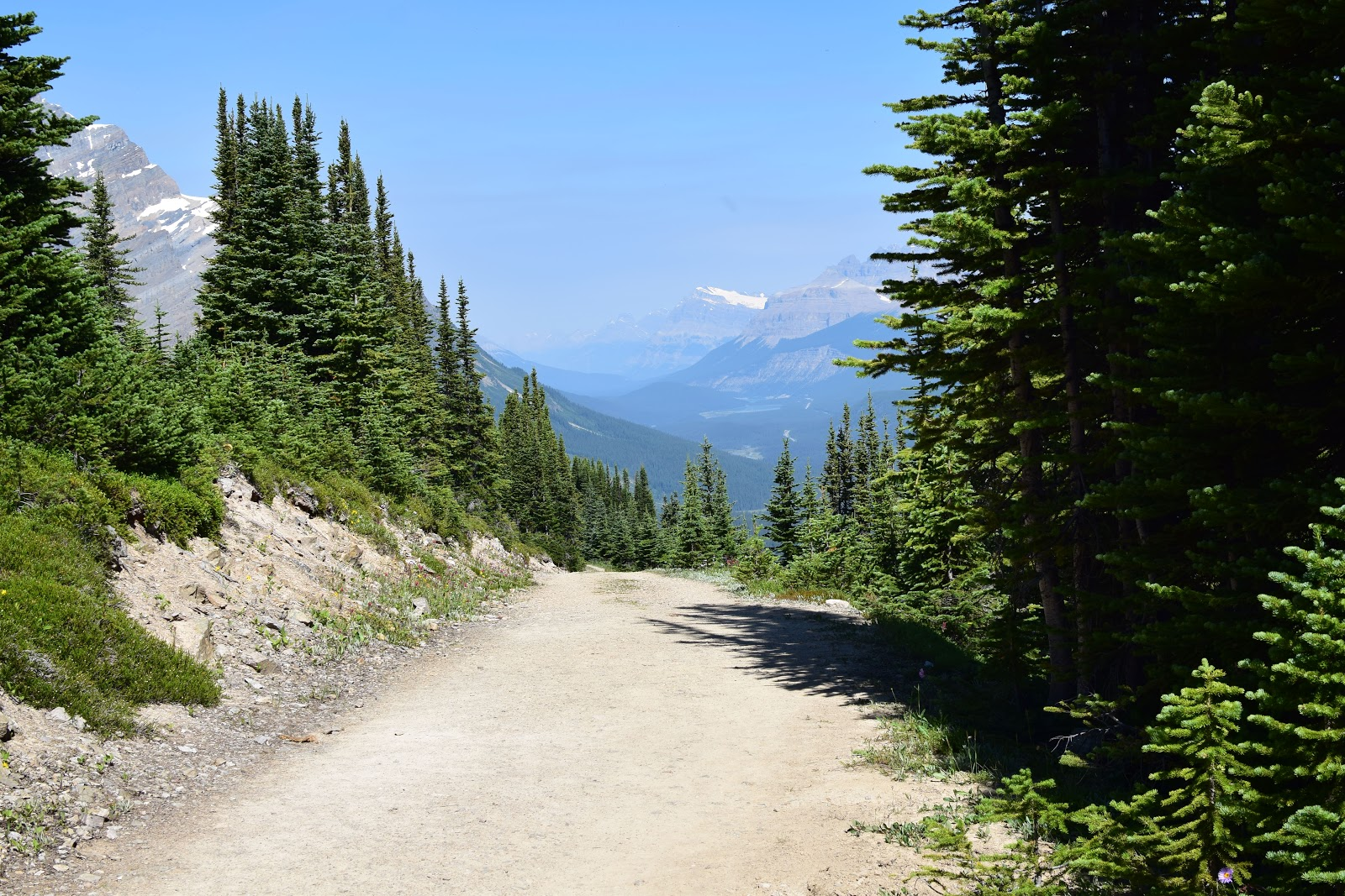 Fire Road to Bow Summit