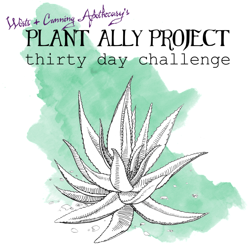 Plant Ally Project.png