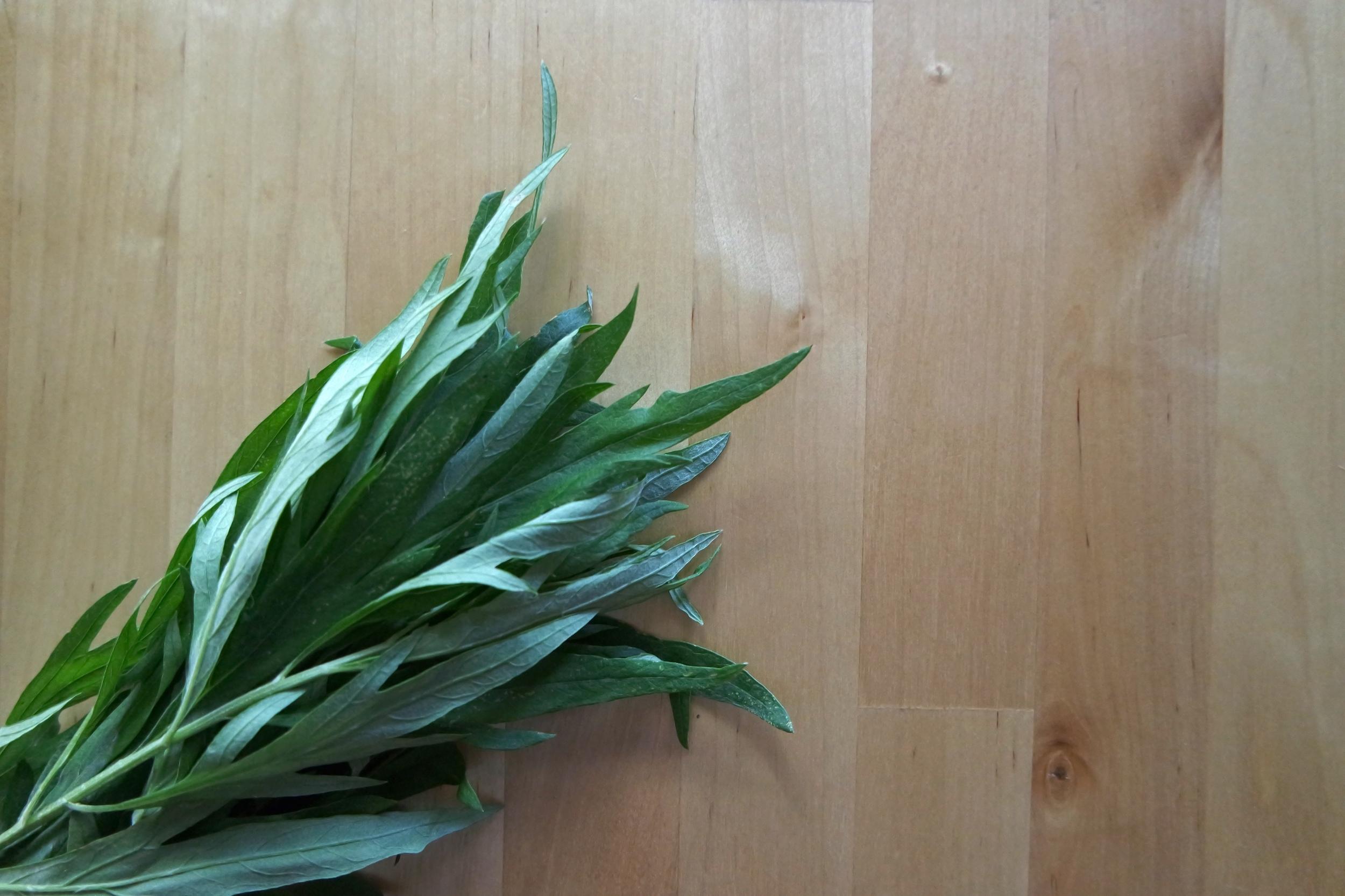 Artemisia douglasiana  aka Dream Plant by author