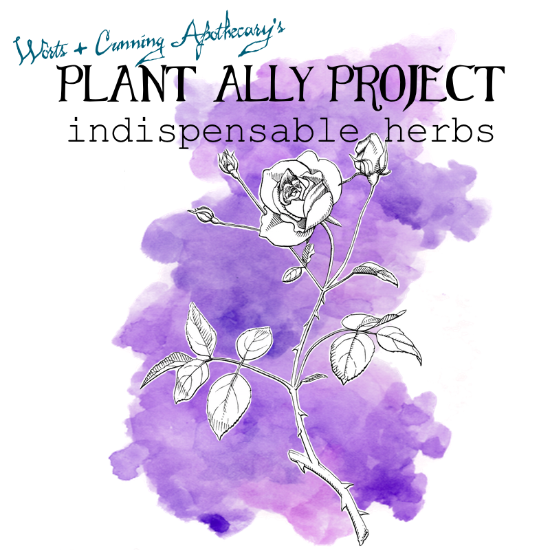 Plant Ally Project Indispensable Herbs.png