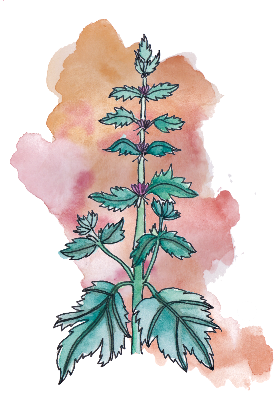 motherwort magick astrology