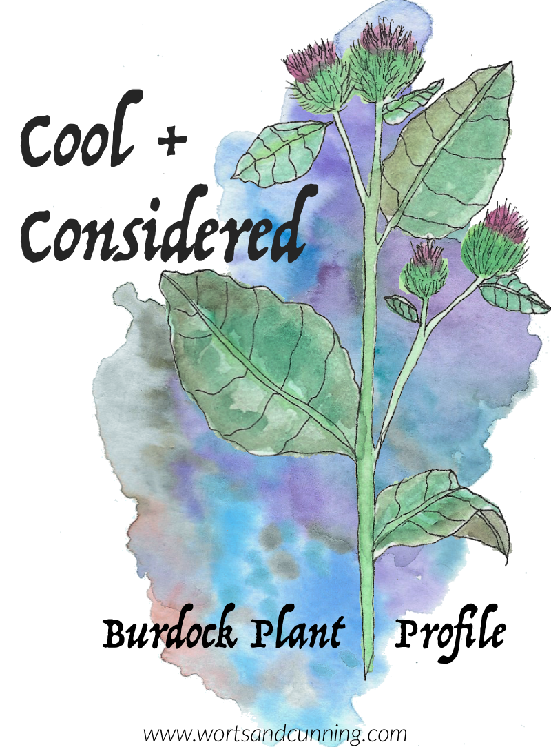 burdock plant profile