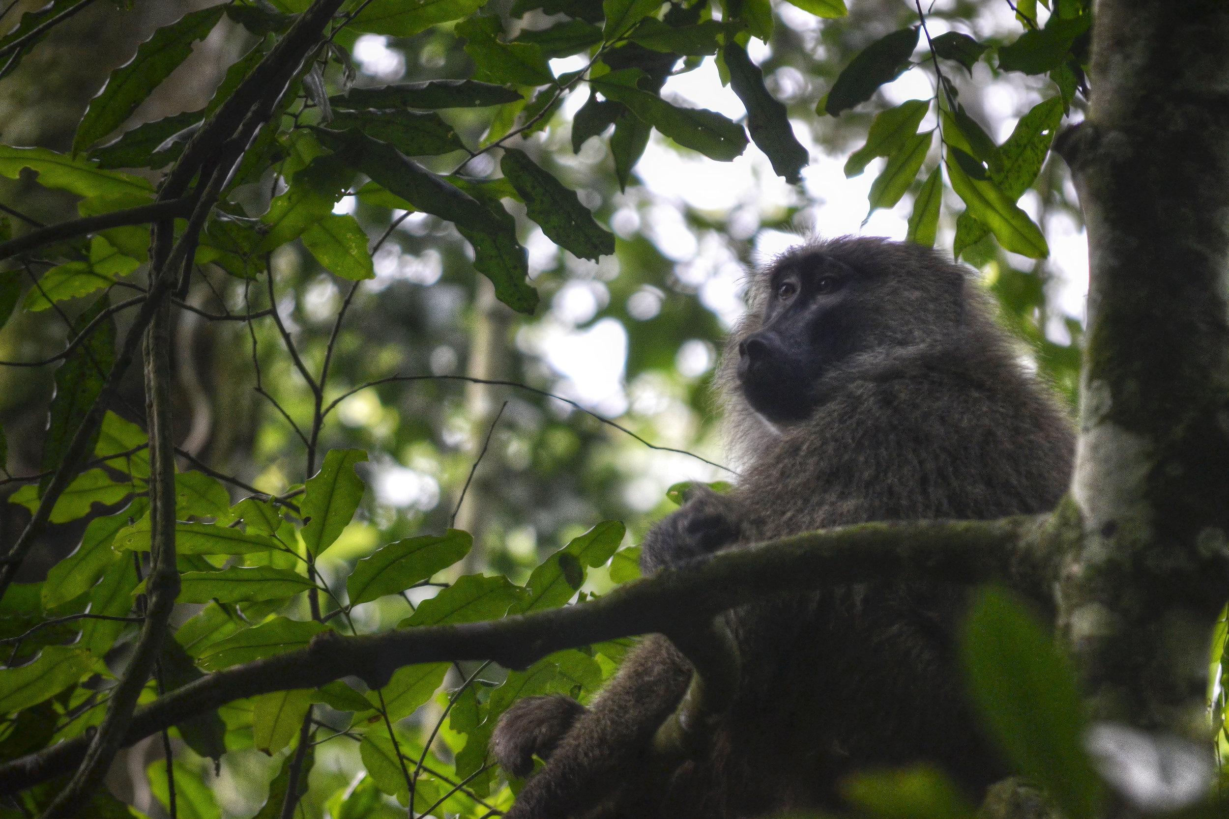 Baboon_Tree_+1_+2_-1_-2_tonemapped.jpg