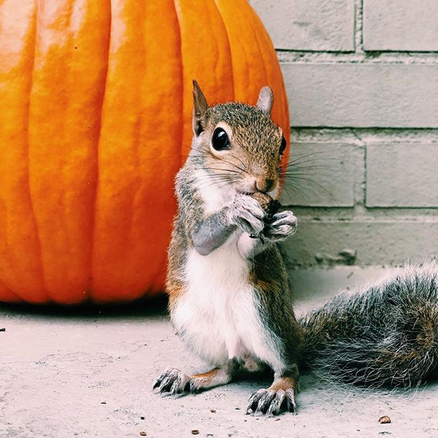Happy October friends!! Channeling all the fall vibes since it's currently still 90 degrees here in Birmingham! #booradleythesquirrel #birminghamblogger #birminghamalabama #southernblogger