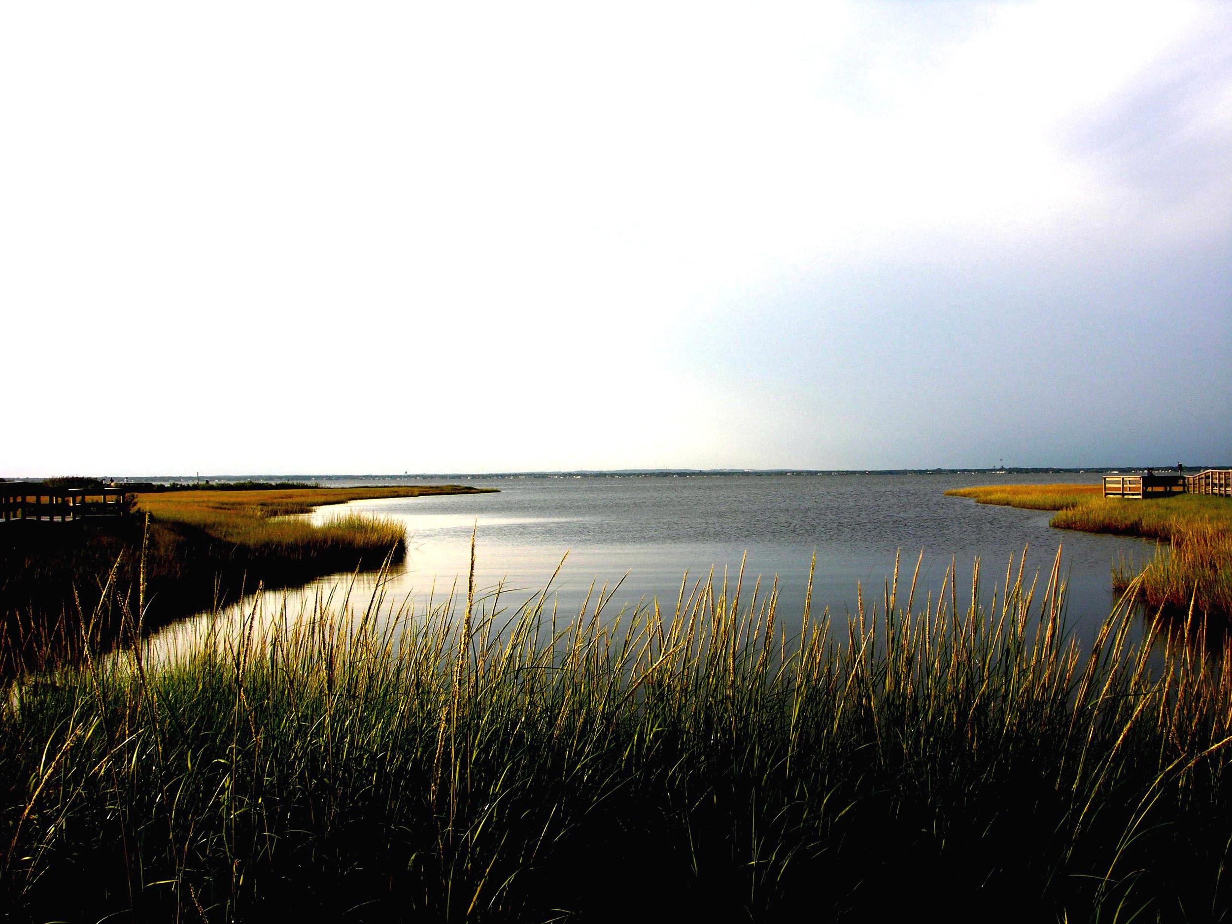 nature-fireisland-fix.jpg