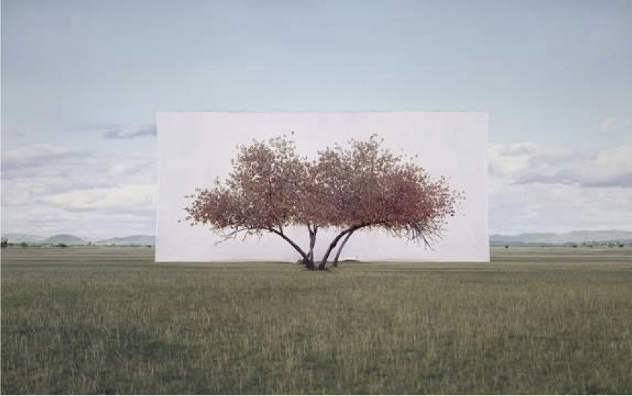 Myoung Ho Lee, Tree... #2, 2011