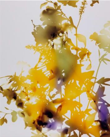 James Welling, 009, 2006