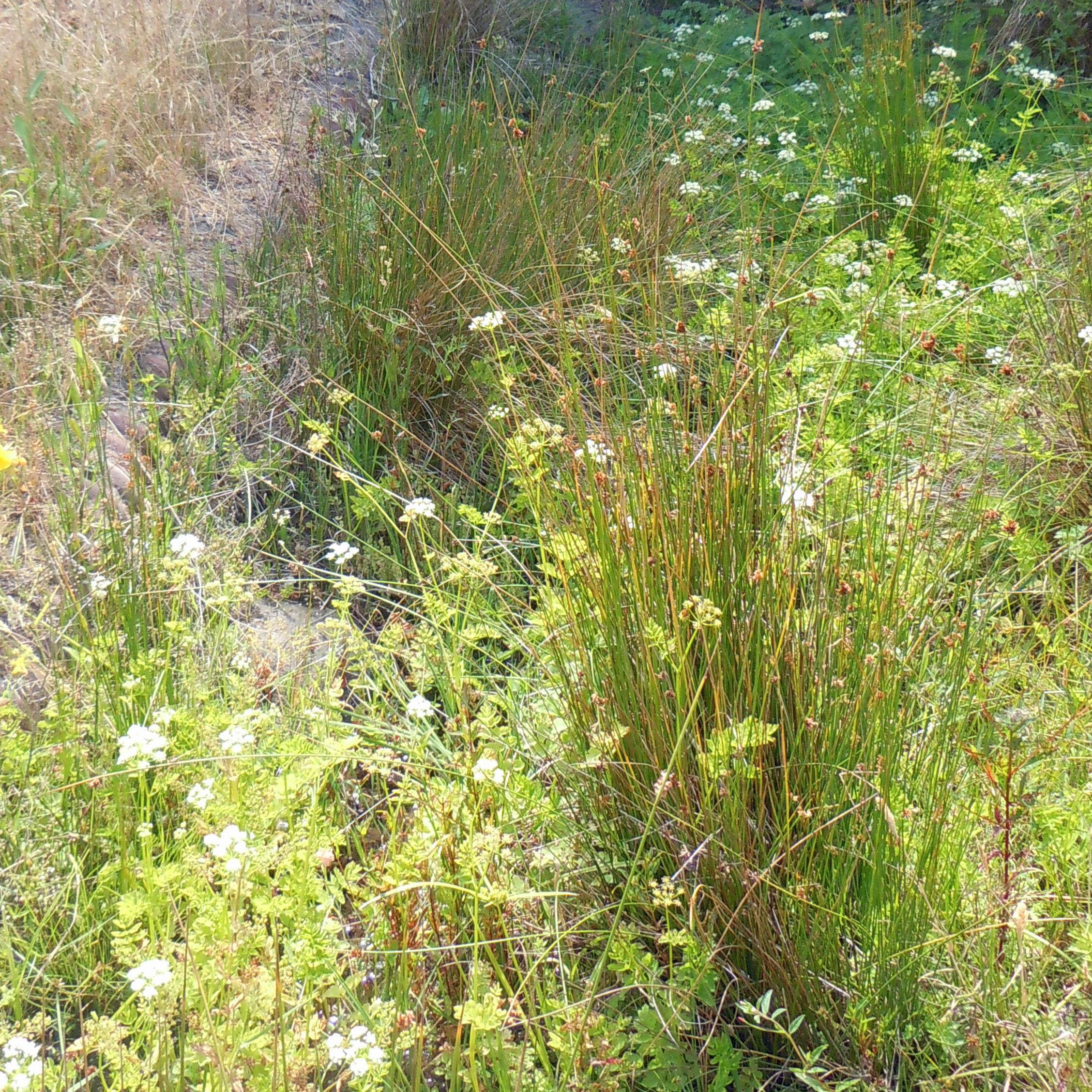 wetland 4 5x5.jpg