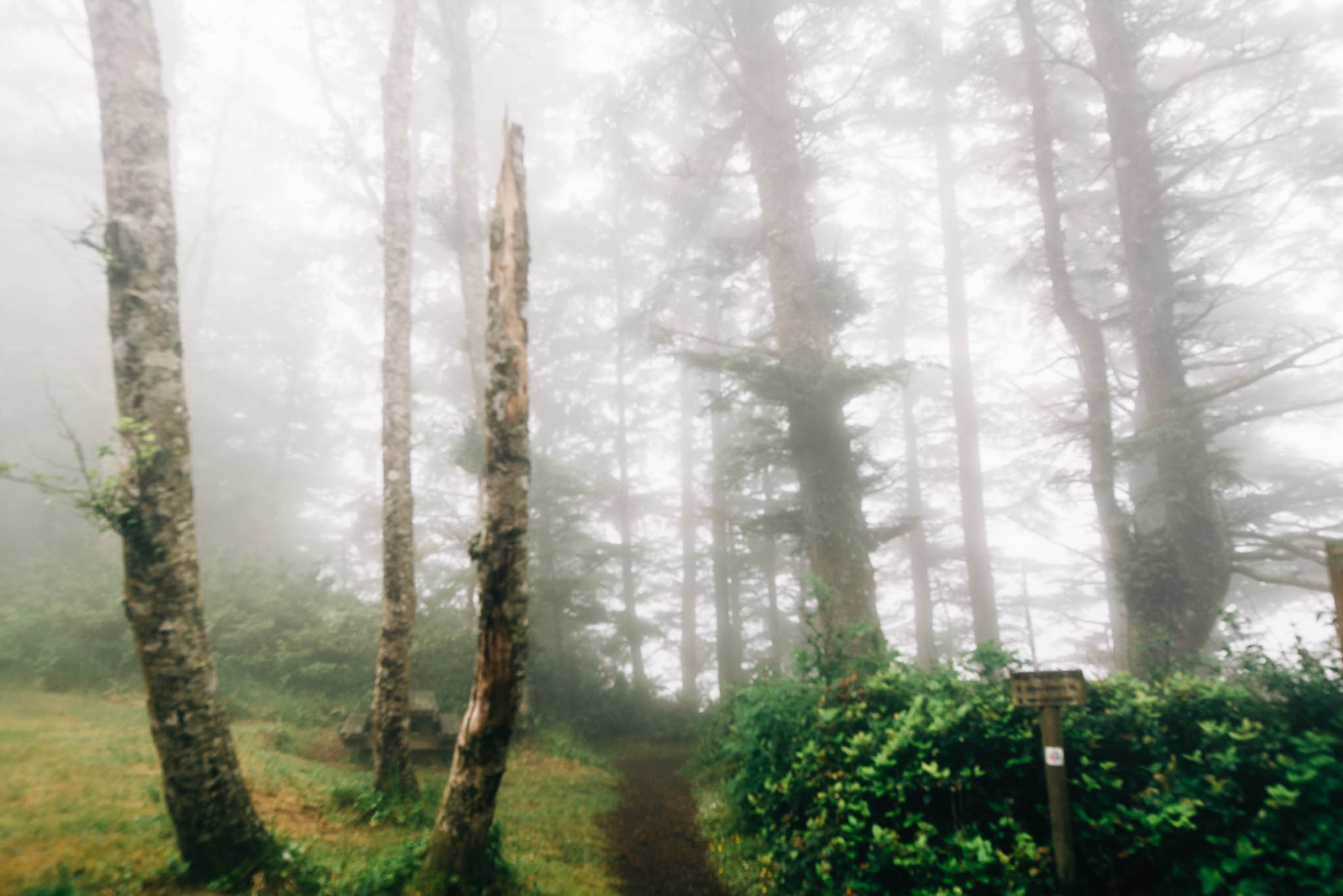 ©The Ryans Photography_Foggy Trails, Oregon-002.jpg