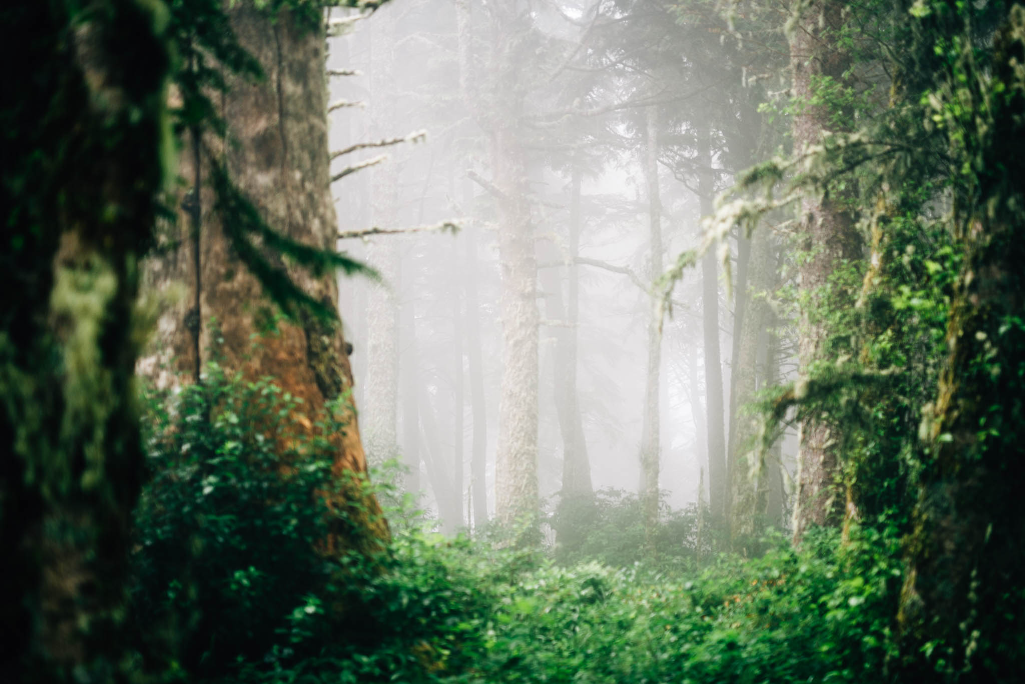 ©The Ryans Photography_Foggy Trails, Oregon-003.jpg
