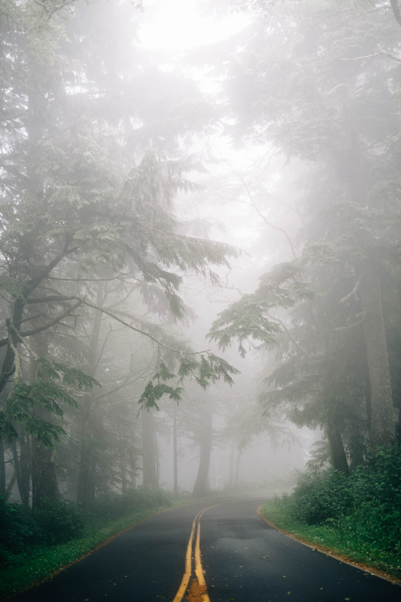 ©The Ryans Photography_Foggy Trails, Oregon-005.jpg
