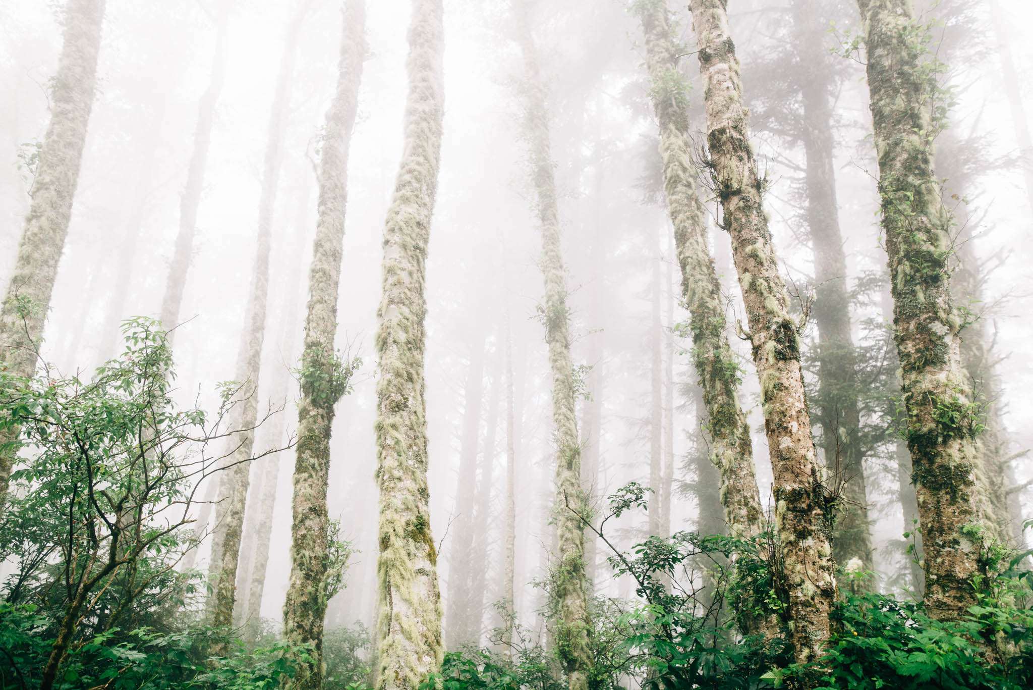 ©The Ryans Photography_Foggy Trails, Oregon-004.jpg