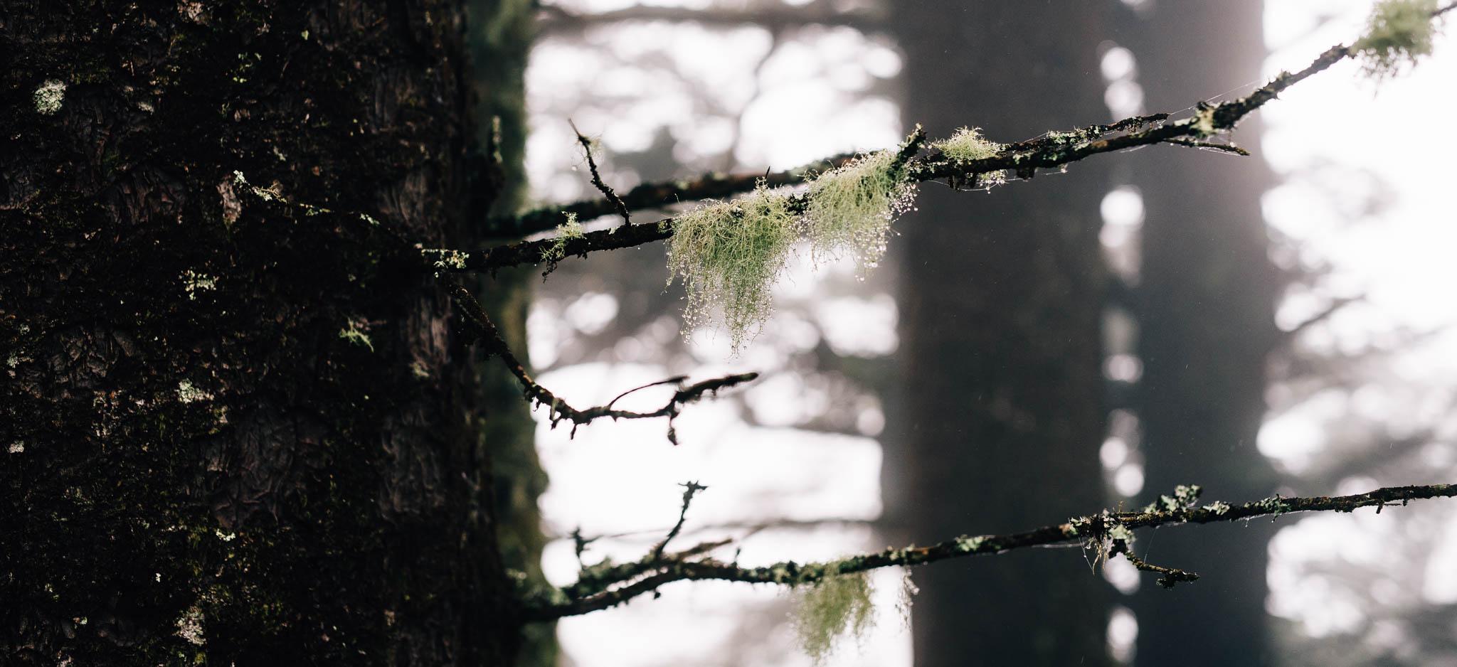 ©The Ryans Photography_Foggy Trails, Oregon-016.jpg