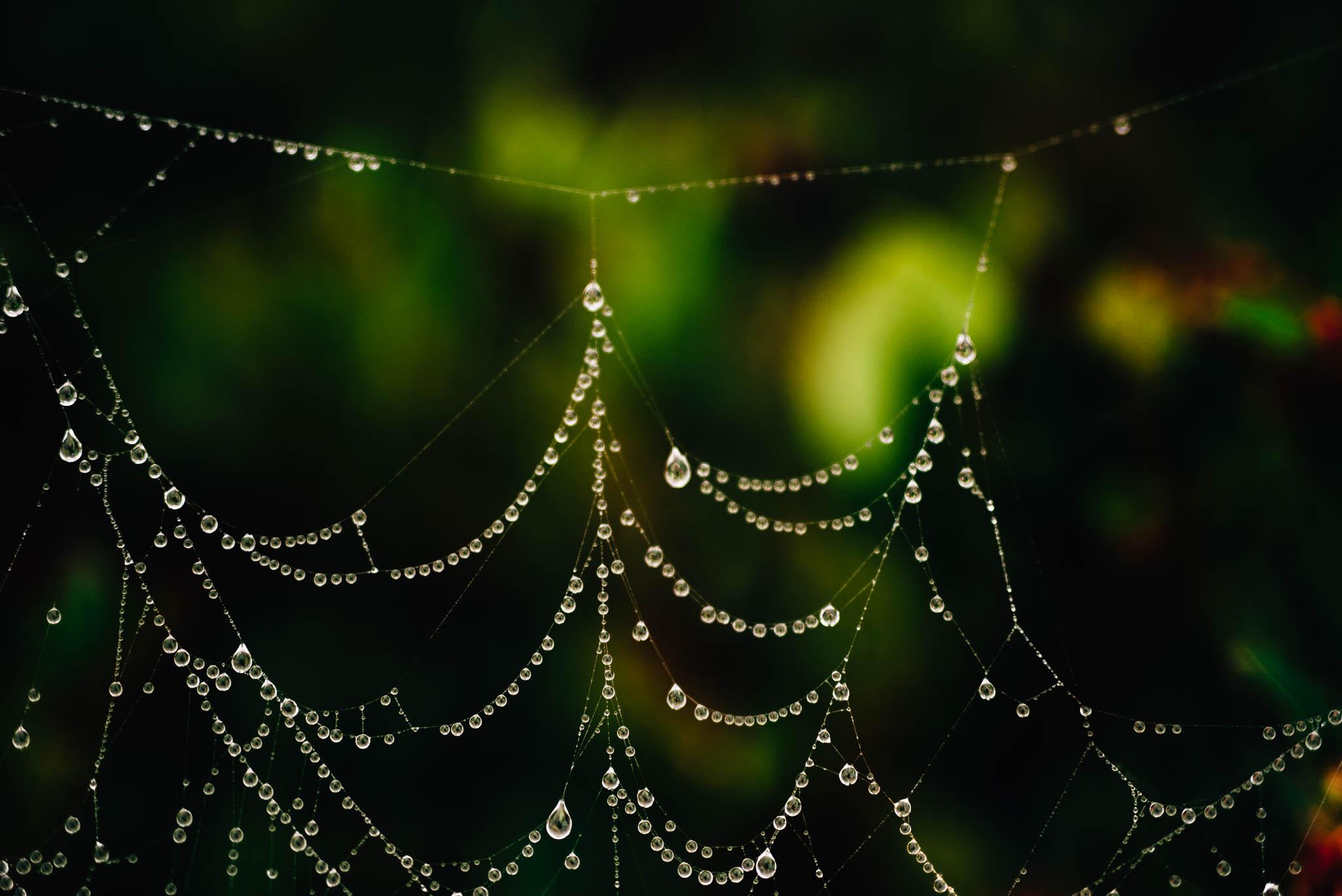 ©The Ryans Photography_Foggy Trails, Oregon-017.jpg