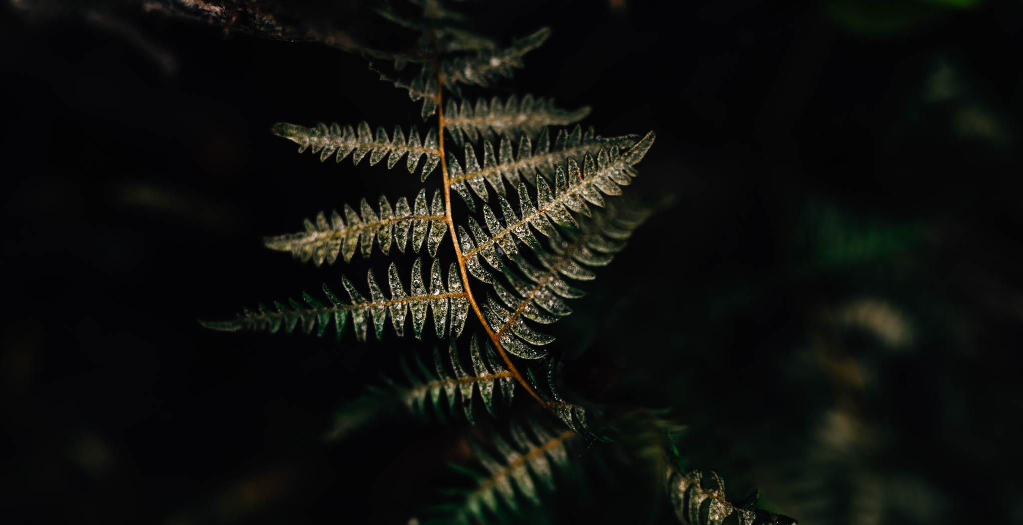 ©The Ryans Photography_Foggy Trails, Oregon-018.jpg