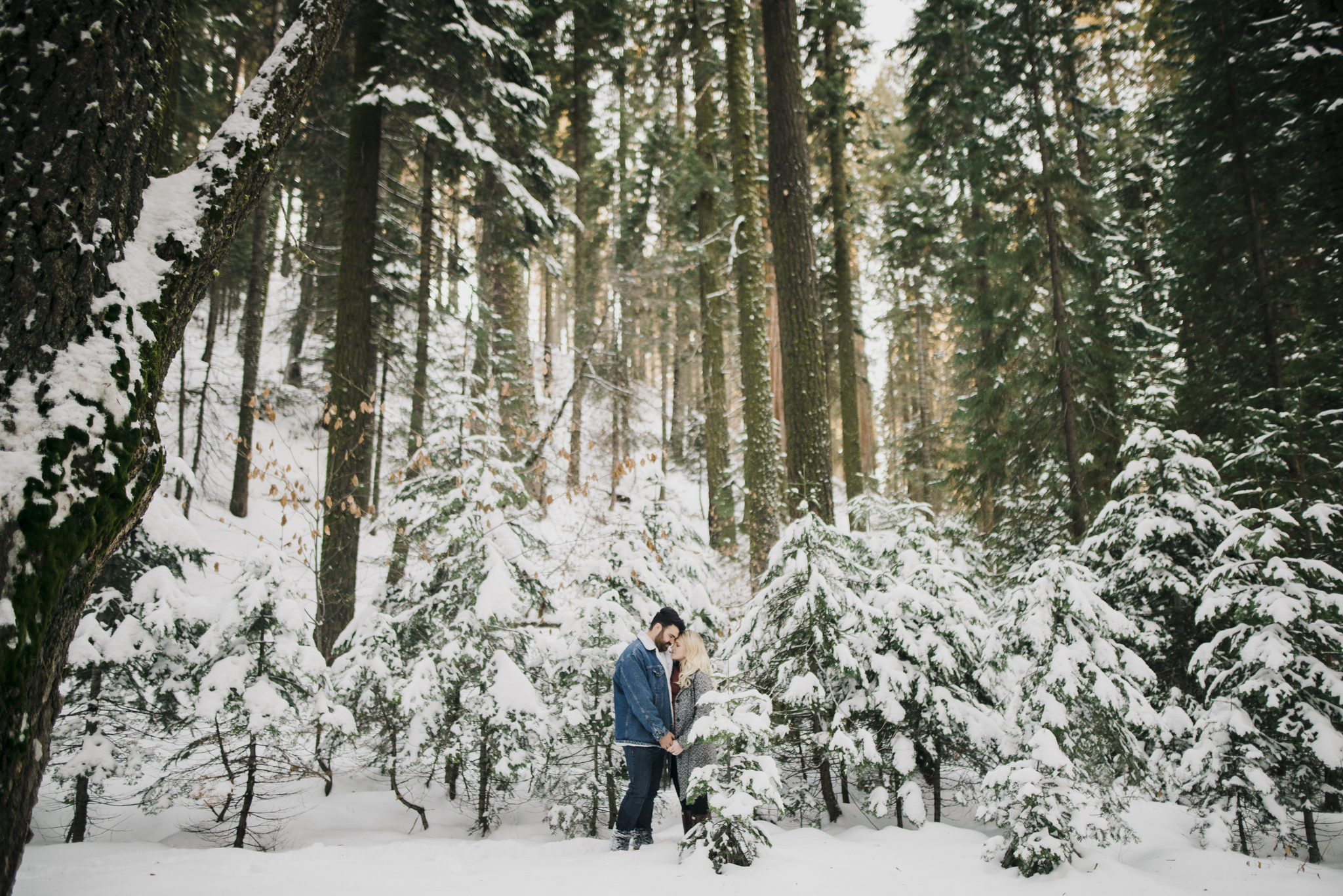 ©Isaiah-&-Taylor-Photography---George-&-Alyssa-Engagement---Sequoia-National-Park,-California-67.jpg