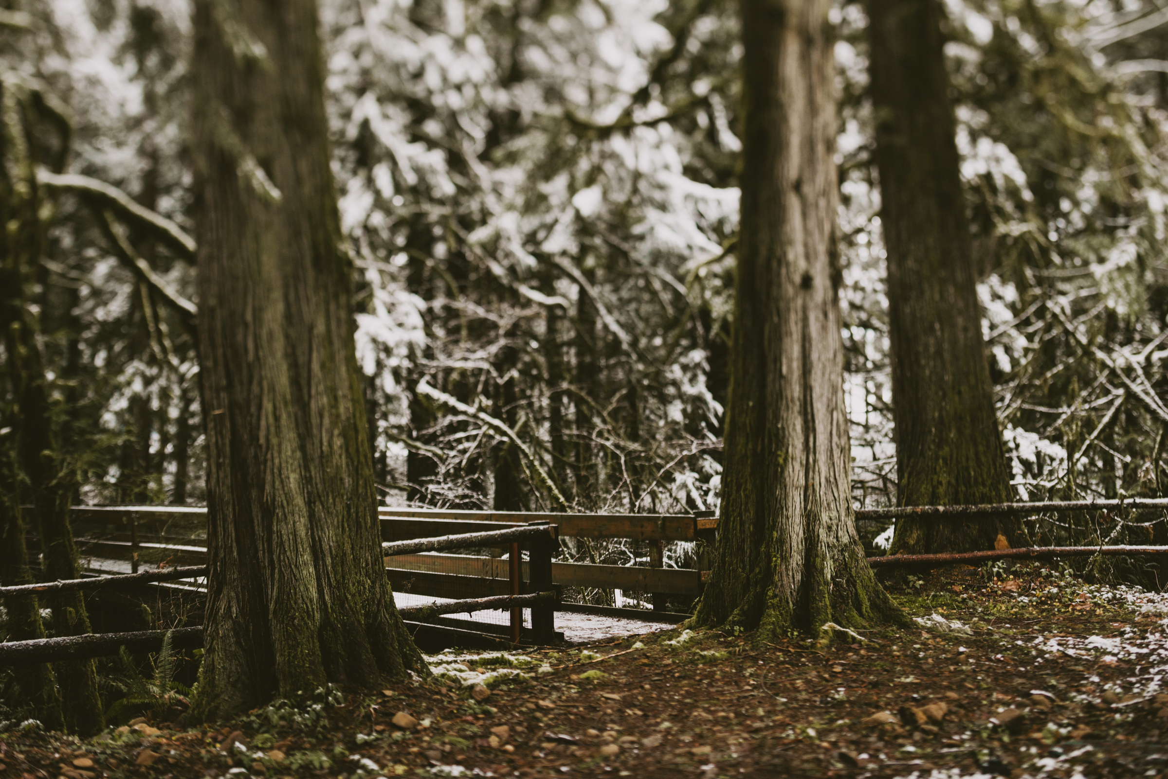 © Isaiah + Taylor Photography - Portland, Oregon Winter Forest Cabin Engagement-3.jpg