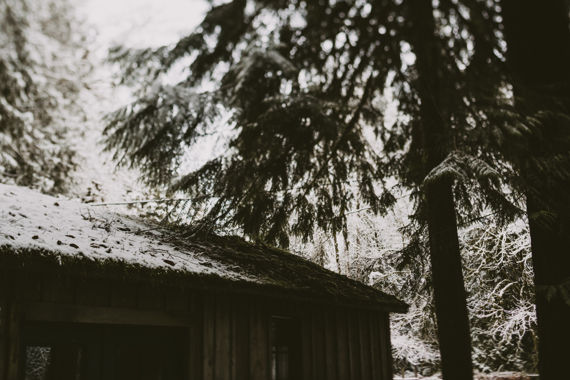 © Isaiah + Taylor Photography - Portland, Oregon Winter Forest Cabin Engagement-4.jpg