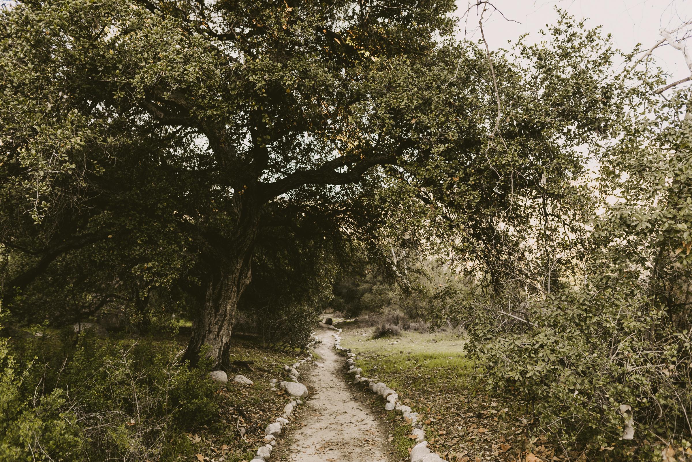 ©Isaiah + Taylor Photography - Intimate Elopement, Eaton Canyon, Los Angeles Wedding Photographer-1.jpg