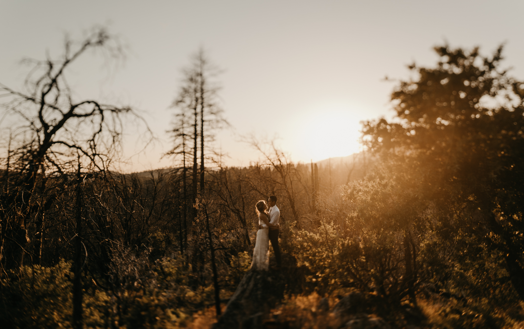 © Isaiah + Taylor Photography - Evergreen Lodge Destination Yoesmite Wedding - Los Angeles Wedding Photographer-215.jpg