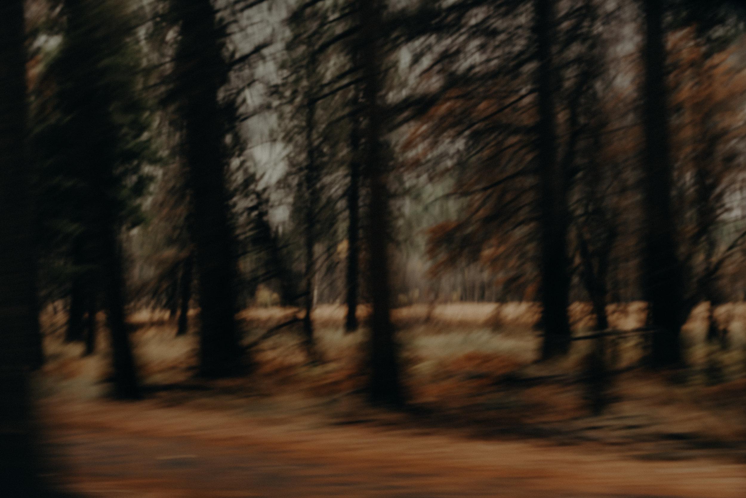 Isaiah + Taylor Photography - Yosemite Elopement - Los Angeles Wedding Photographer-2.jpg
