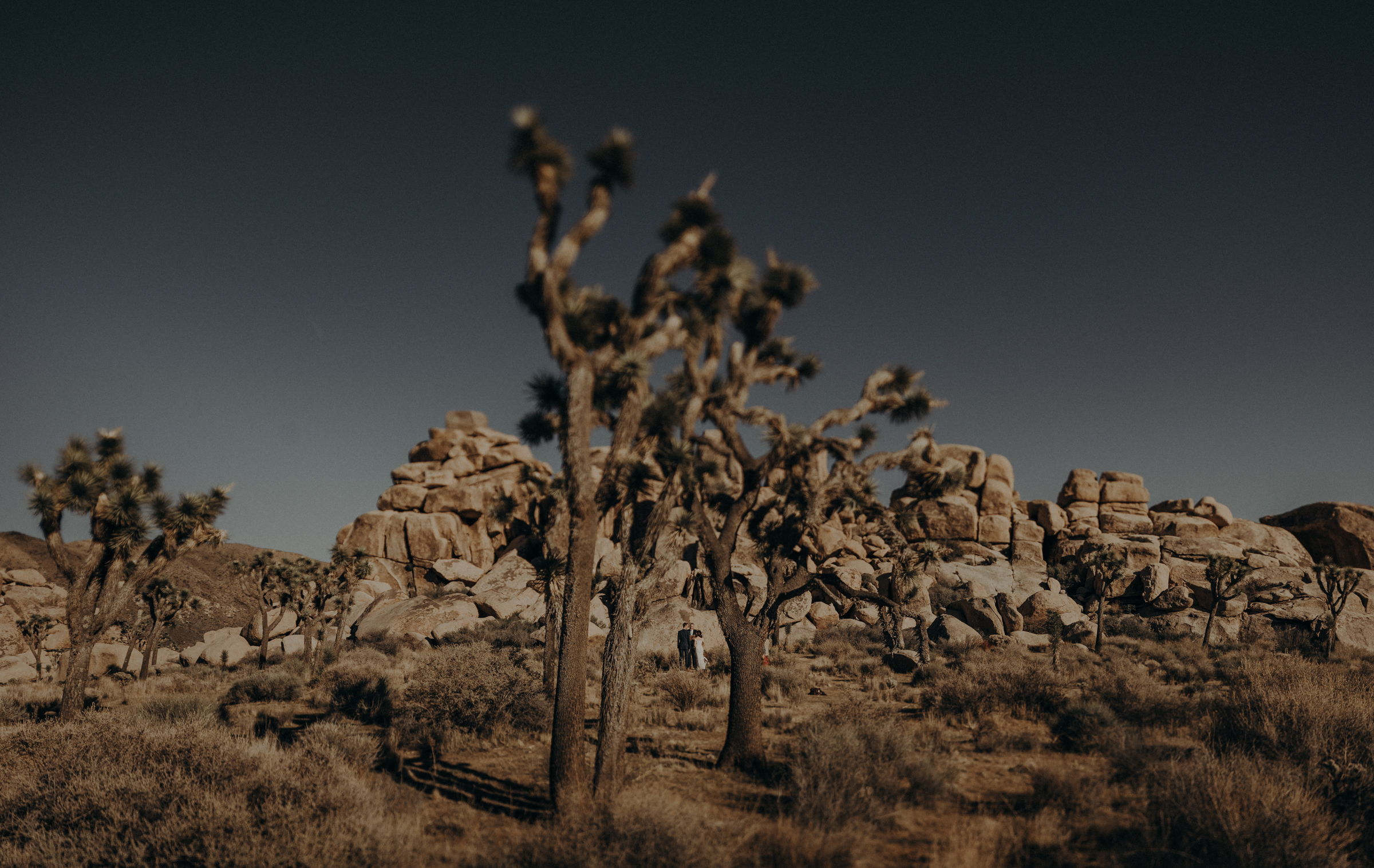 Joshua Tree Elopement - Los Angeles Wedding Photographers - IsaiahAndTaylor.com-023.jpg