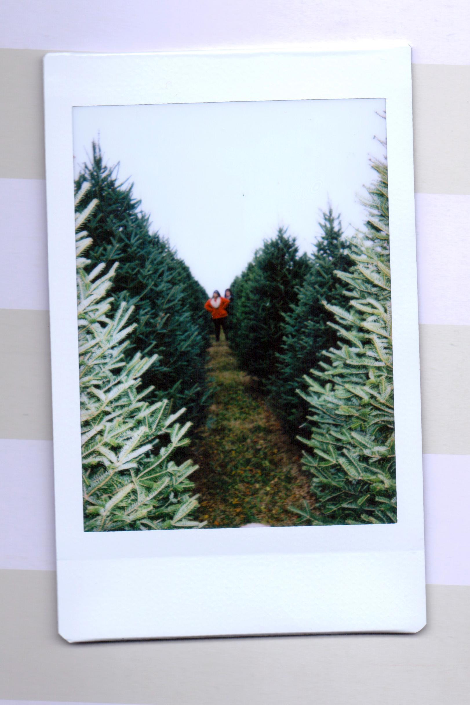 tree 4.jpeg