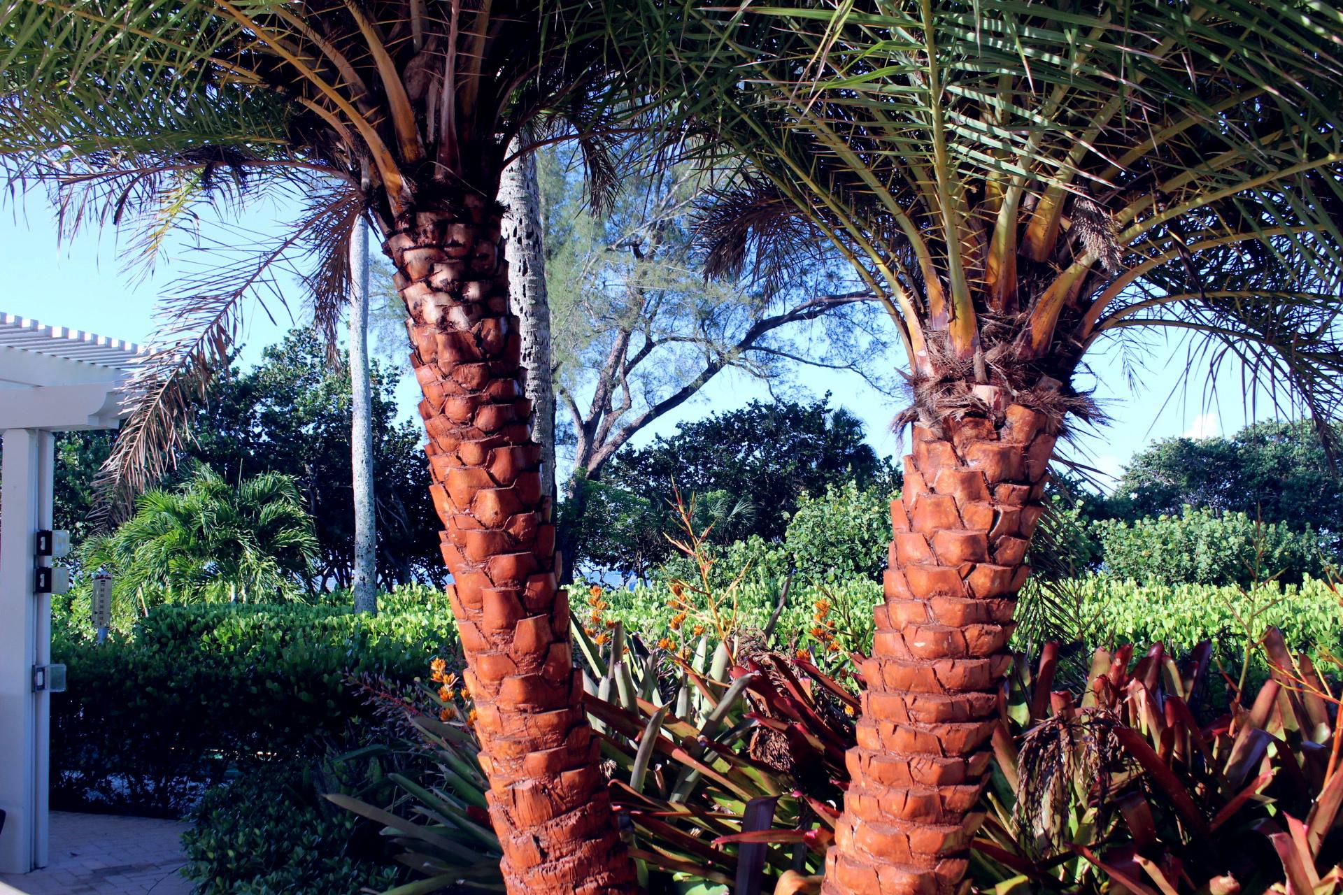 florida-vacation-edit-8.jpg