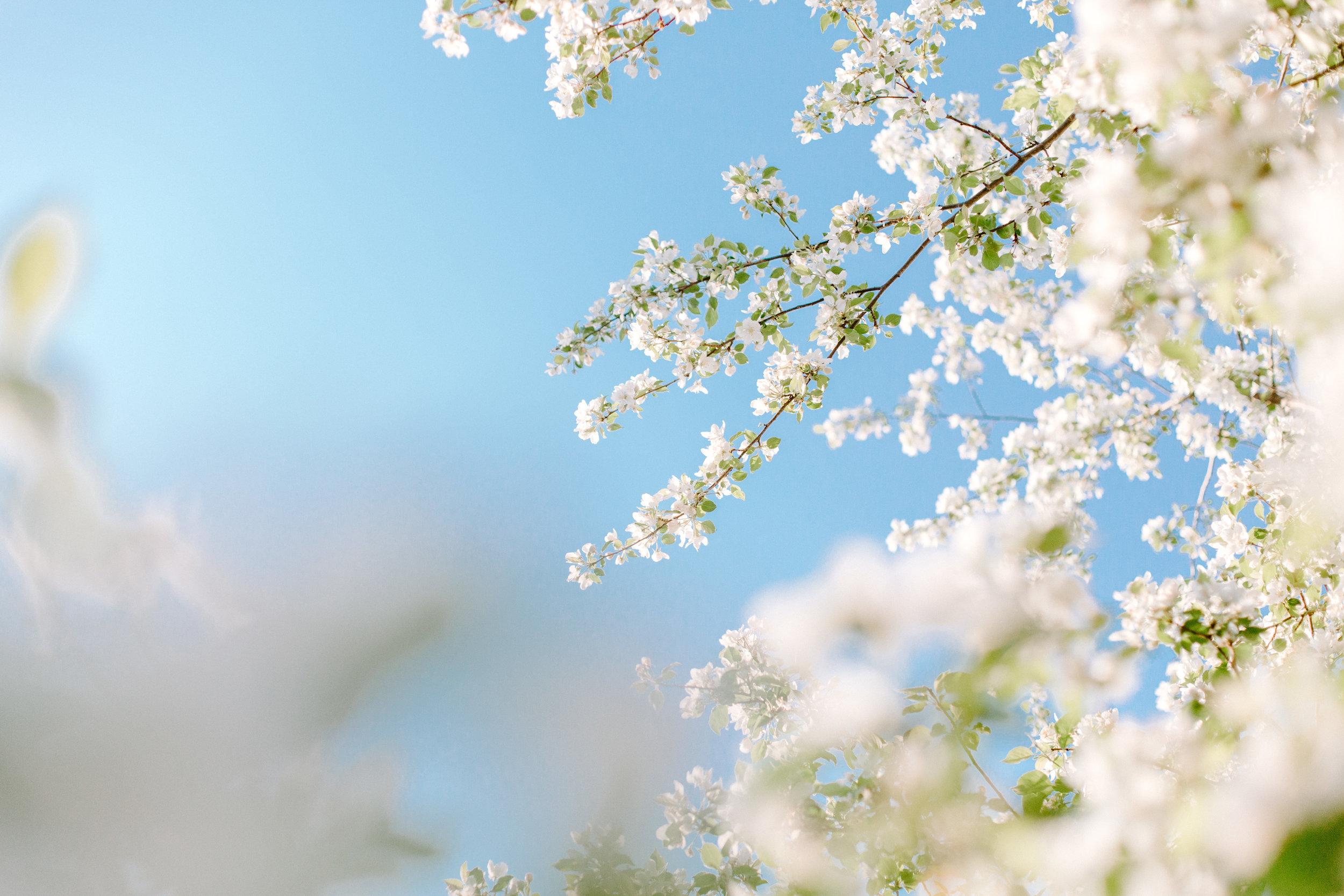 orchard.2139.JPG