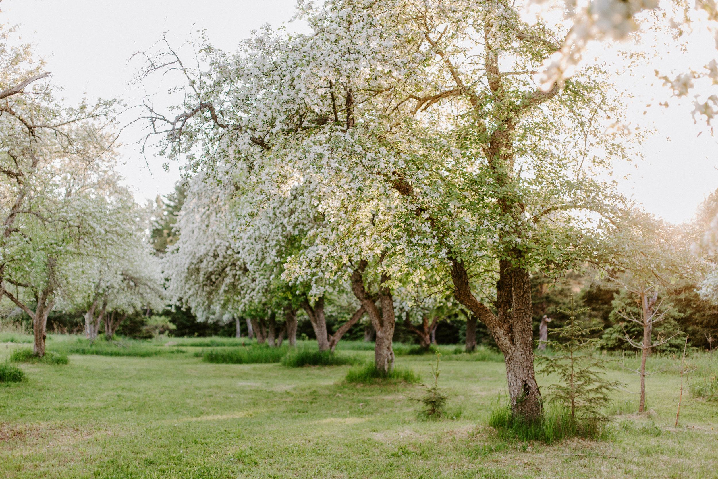 orchard.2148.JPG