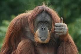 orangutanphotos.blogspot.com