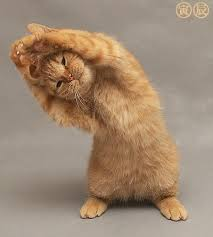 http://www.mayoclinic.com/health/stretching/SM00043