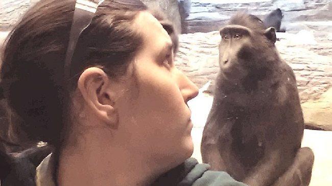 041157-monkey-photobomb.jpg