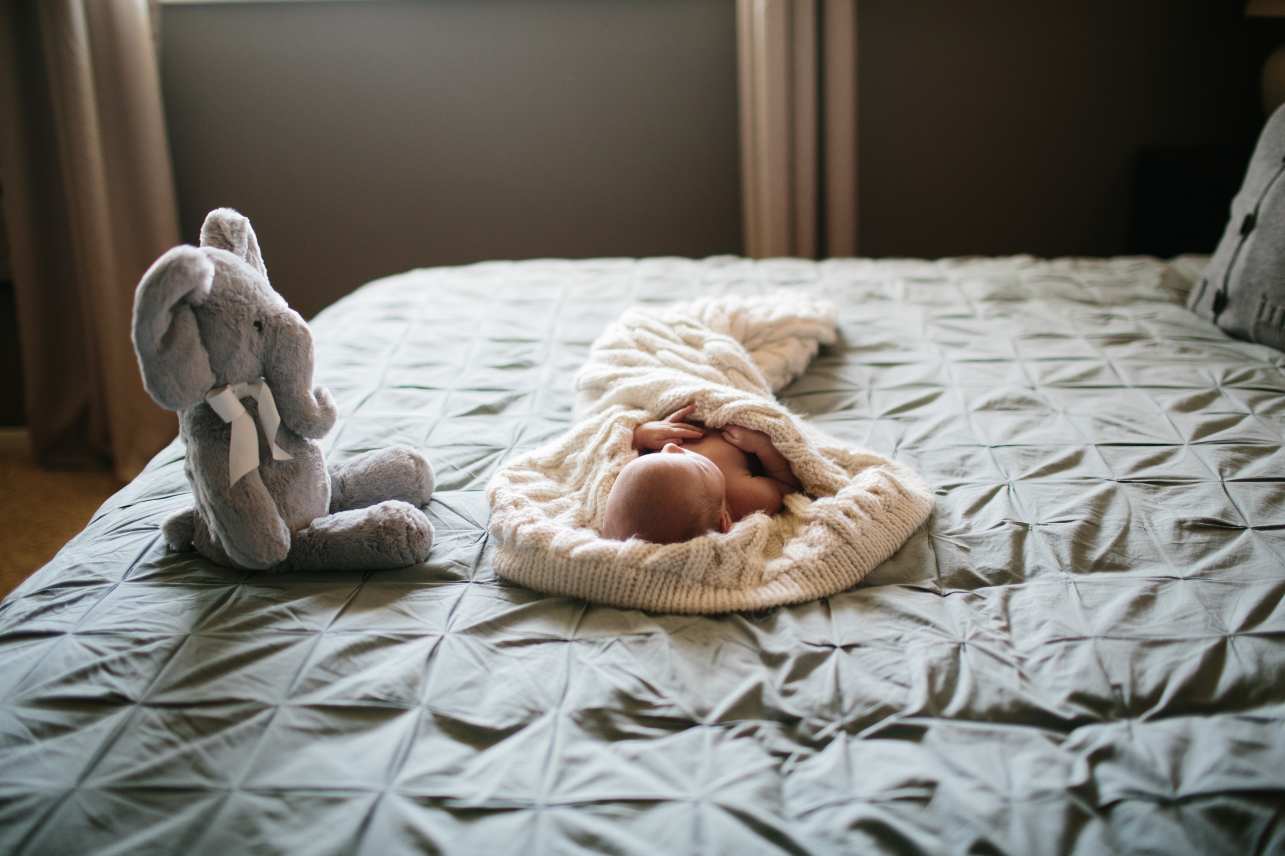 cedar falls iowa newborn photographer