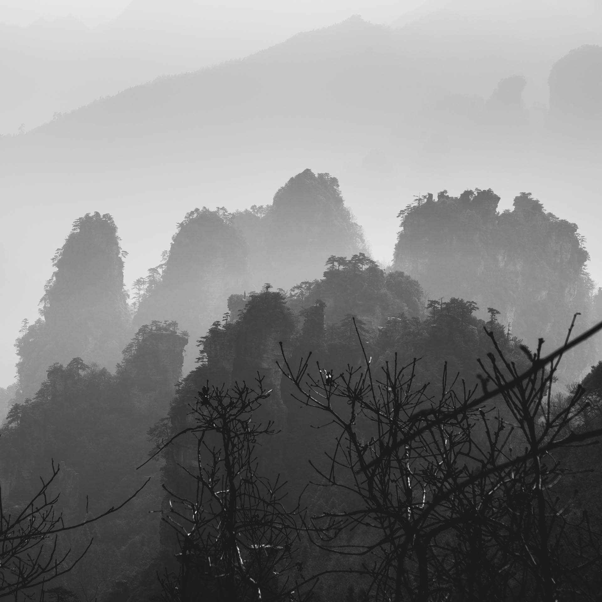 Shadowy peaks in Zhangjiajie. China