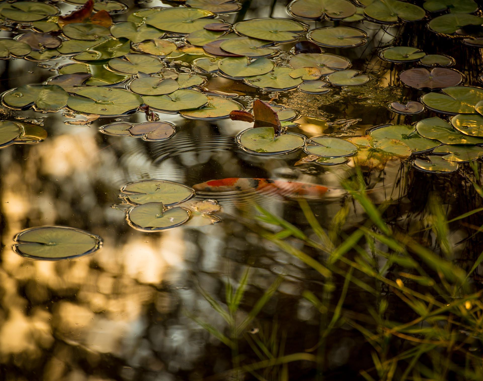 Pond at Namsan Park