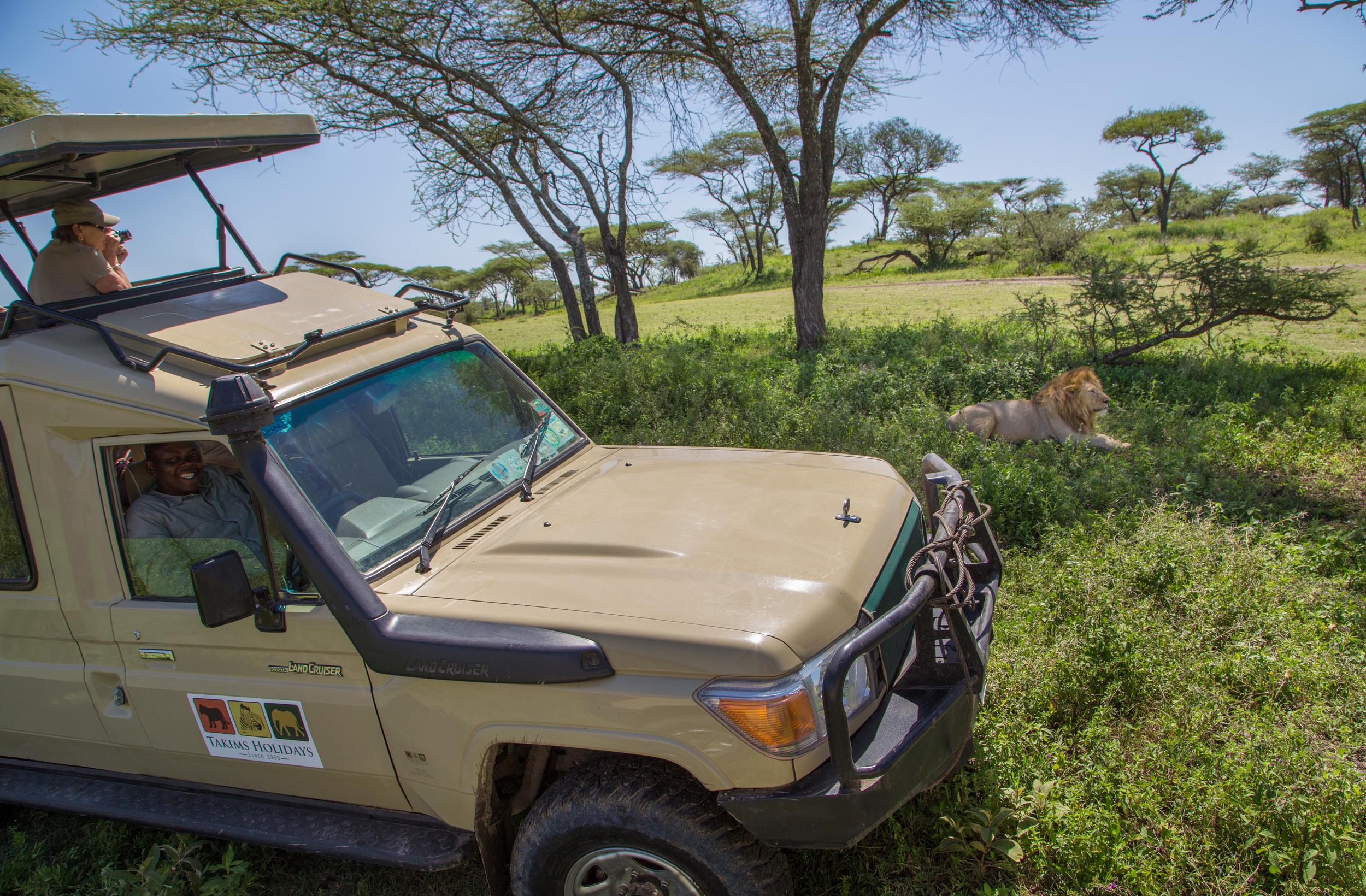 cruiser with male lion.jpg