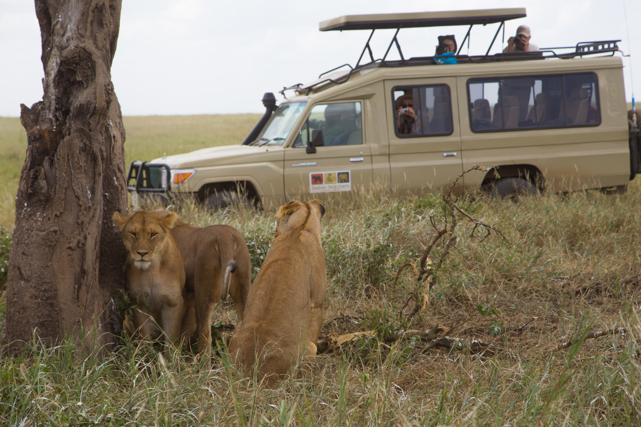 Cruiser with lions.jpg
