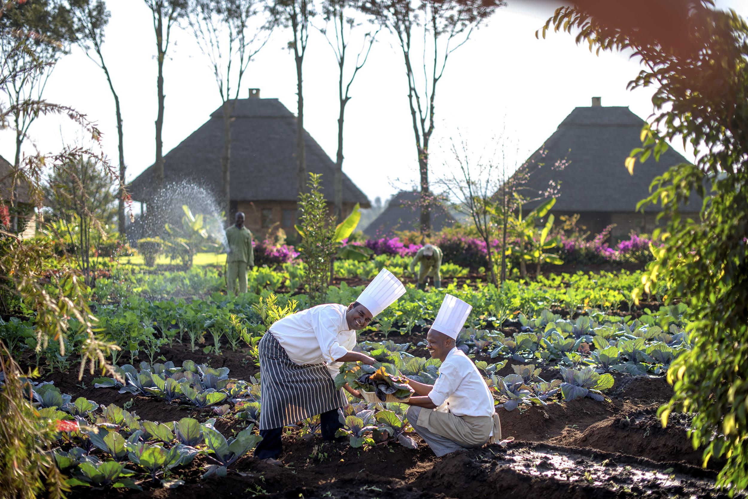 Ngorongoro - chefs in potager_original.jpg