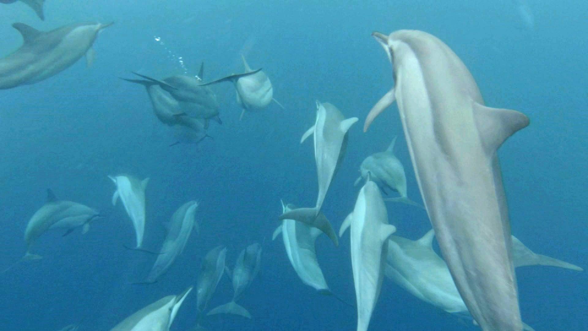 8 Underwater 1.jpg