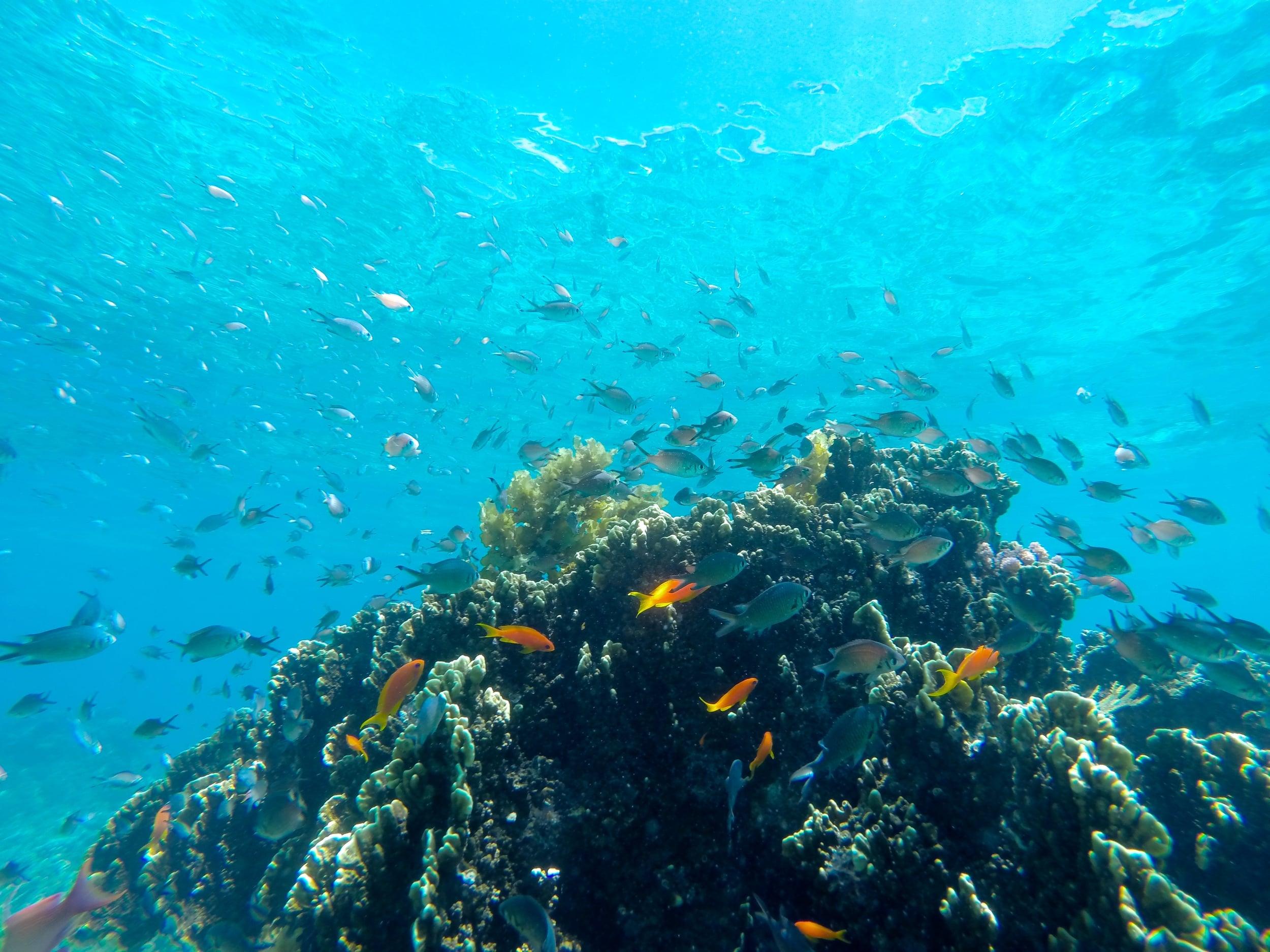 8 Underwater 13.JPG