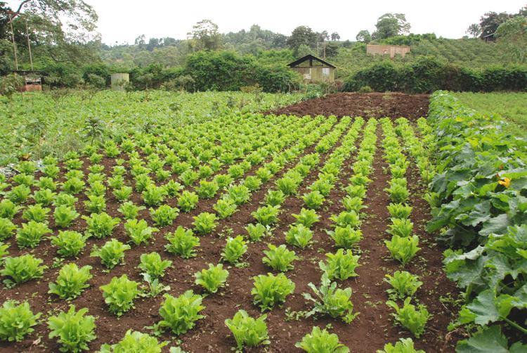 Gibbs_Farm_Tanzania_Safari_Landscape_3_Takims_Holidays