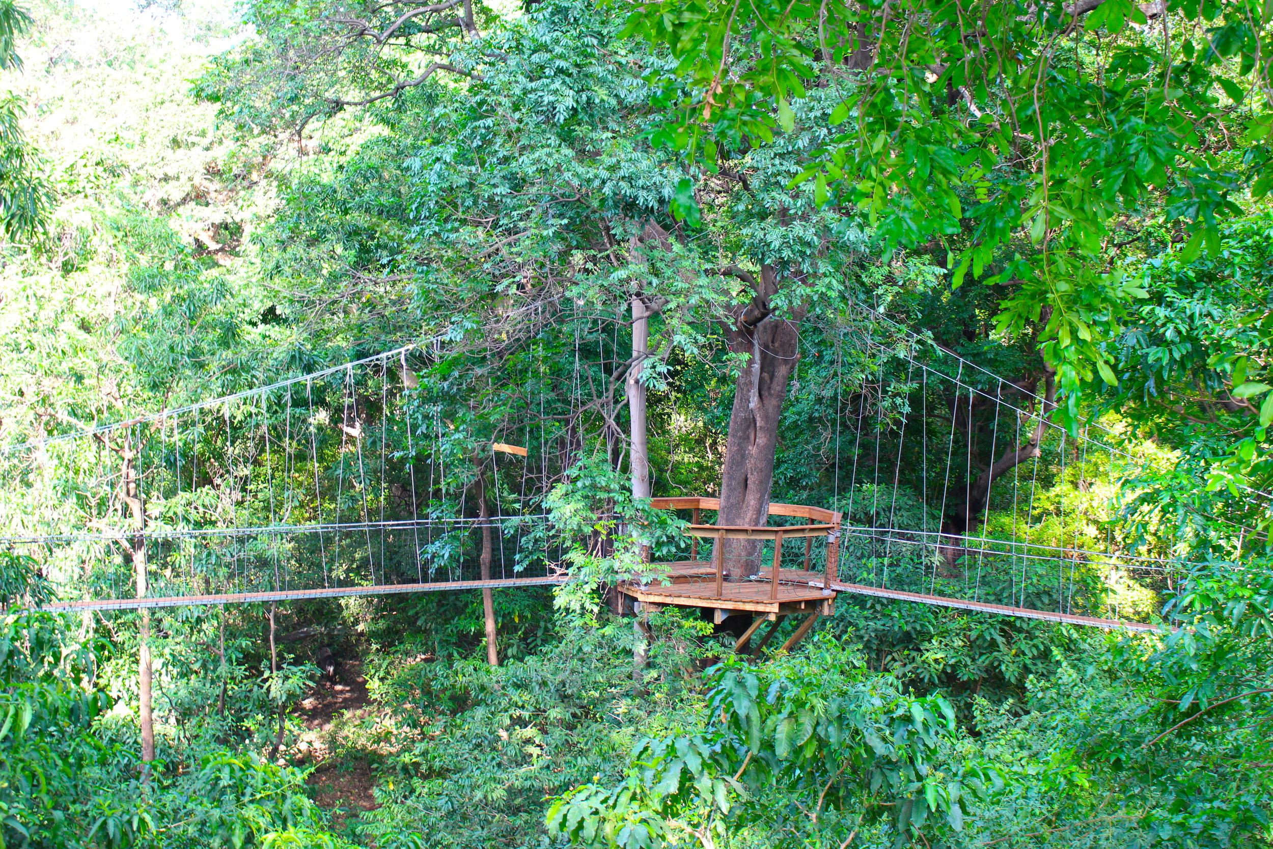 treetop_walkway_lake_manyara_takims_holidays_2