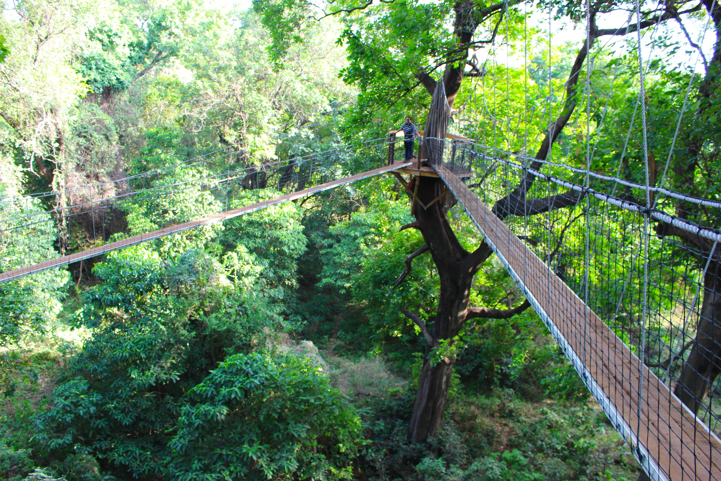 treetop_walkway_lake_manyara_takims_holidays_4