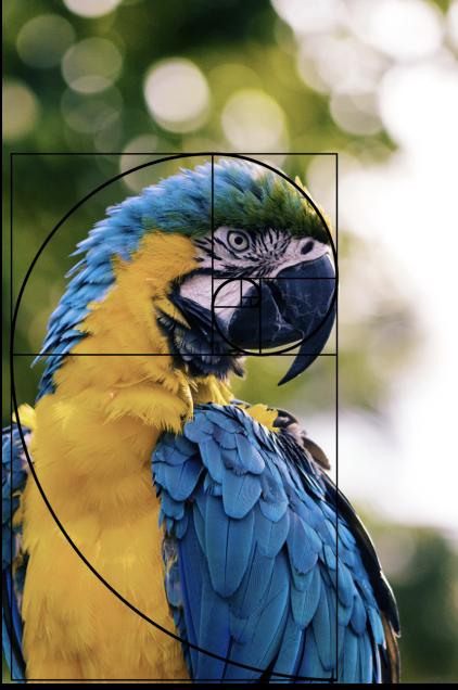 Fibonacci-parrot