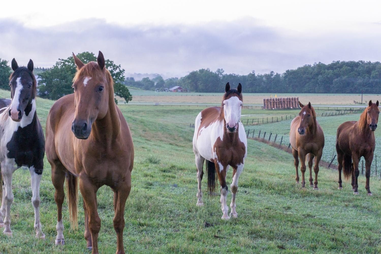 Horse Friends at Sunrise