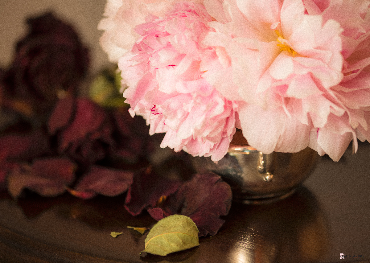 """""""New peonies, old roses"""" (c) Rebecca LaChance, 2016, Thurmont, MD.  A still life that came about trying """"VerMeer lighting"""" while taking part in a May Daily Photo Challenge. The silver sugar bowl was a """"find"""" of my scavenger hunt at local thrift shops and antique marts."""