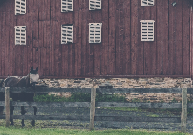 """I saw this fellow while I was driving around after my planned twilight shoot. He heard me coming and turned directly towards me. I was mesmerized by his curiosity. Another weekend, another horse friend! """"Horse with fly mask"""" (c) Rebecca LaChance, 2015, Graceham, MD."""